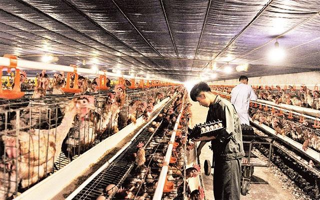 Quốc Oai xây dựng các xã đạt chuẩn nông thôn mới nâng cao ảnh 1
