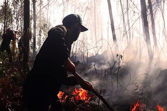 Cháy hơn 50ha rừng tràm ở Kiên Giang ảnh 1