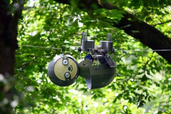 Clip: Cận cảnh chú robot theo dõi động vật quý hiếm đang bị đe dọa ảnh 1