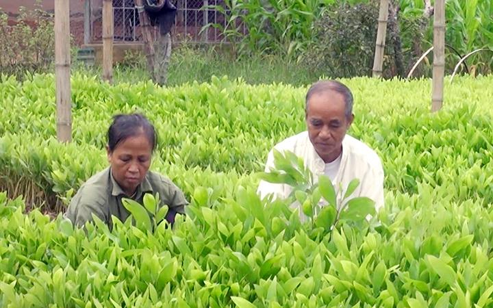 Mở rộng diện tích rừng trồng theo tiêu chuẩn quốc tế ảnh 1