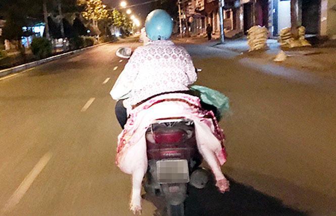 Xử lý nghiêm việc vận chuyển, buôn bán, giết mổ lợn nghi mắc bệnh, lợn bệnh, lợn chết ảnh 1