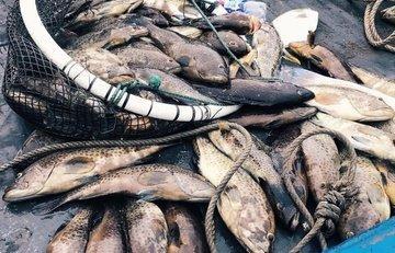 Làm rõ nguyên nhân gần 30 tấn cá chết bất thường ở Thanh Hóa ảnh 1