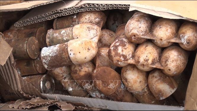 Phát hiện gần 500 quả đạn, vật nổ trong hầm đạn ở rừng keo ảnh 1