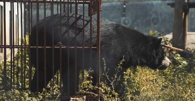 Phim ngắn 'Ác mộng của bạn-Hiện thực của gấu' hướng tới thay đổi cách ứng xử với thiên nhiên ảnh 1