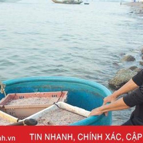 Ruốc theo từng luồng, ngư dân Cẩm Lộc phấn khởi đánh bắt