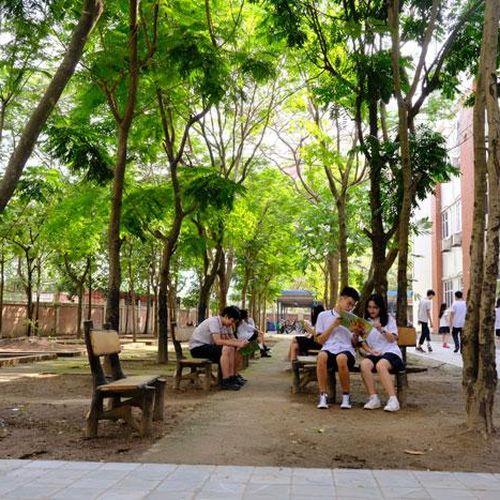 Thận trọng xử lý cây xanh trong trường học
