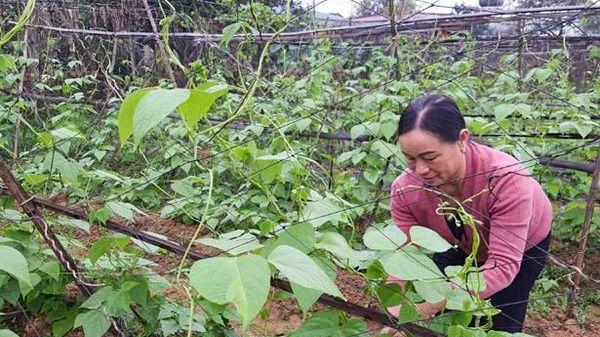 Cần mẫn với hơn 2.000 m2 đất vườn, vợ chồng nông dân Hà Tĩnh thu 300 triệu đồng/năm
