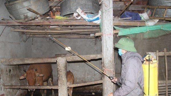 Xuất hiện bệnh lạ trên gia súc khiến người dân lo lắng