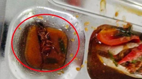 Vụ học sinh phát hiện gián trong khay thức ăn ở căn- tin trường: Sở GD&ĐT TP.HCM vào cuộc xác minh