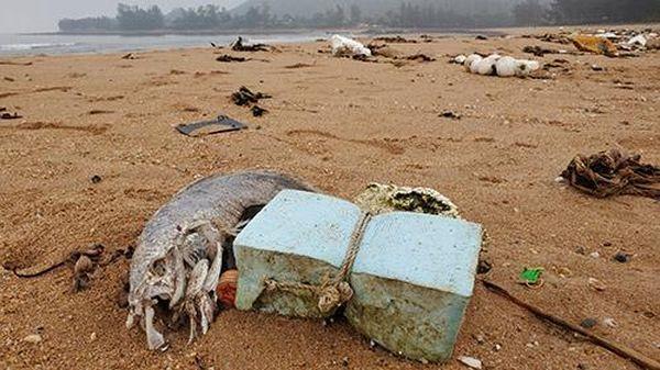 Cá chết hàng loạt, chưa rõ nguyên nhân dọc bờ biển Nghệ An