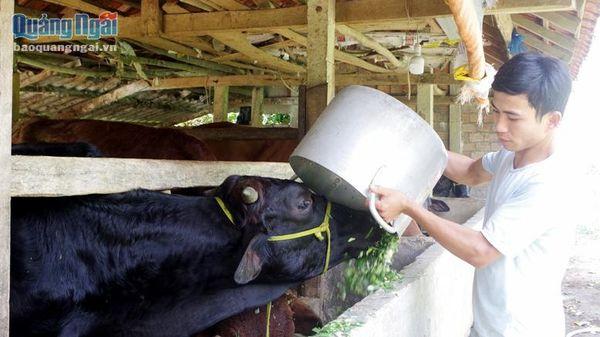 9X làm giàu với trang trại chăn nuôi
