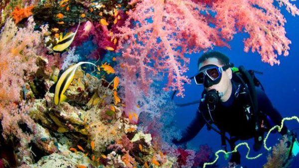Ngắm san hô tuyệt đẹp ở Hòa Lợi resort