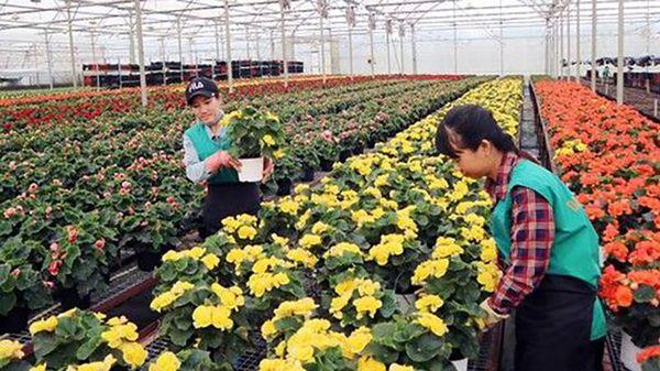 Thúc đẩy chuyển đổi số trong nông nghiệp