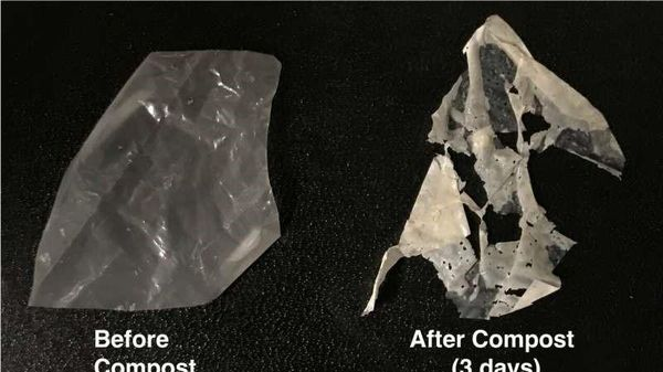 Enzyme: Cơ hội đẩy nhanh quá trình phân hủy nhựa sinh học