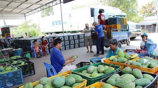 Để liên kết sản xuất, tiêu thụ trái cây hiệu quả
