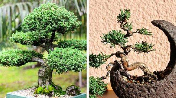 7 loại cây cảnh dễ gây nguy hiểm, không nên trồng trong nhà kẻo rước họa vào thân