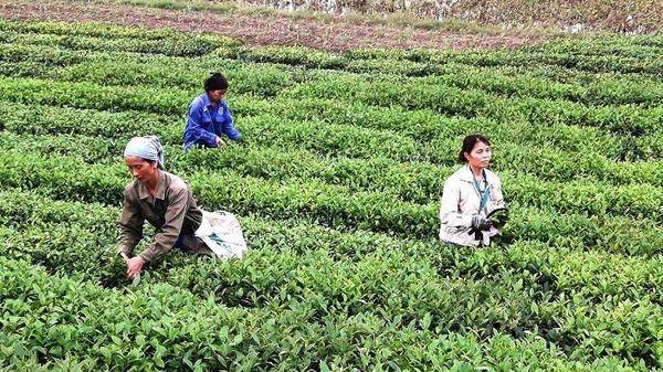 Hạ Hòa (Phú Thọ): Thực hiện các mục tiêu của Nghị quyết Đại hội Đảng bộ huyện