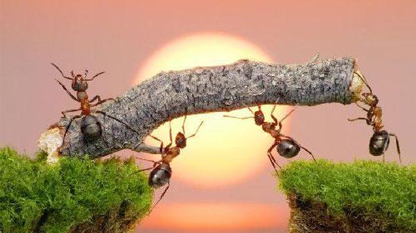 Một con kiến có thể sống sót nếu rơi từ nóc nhà cao ốc hay không?
