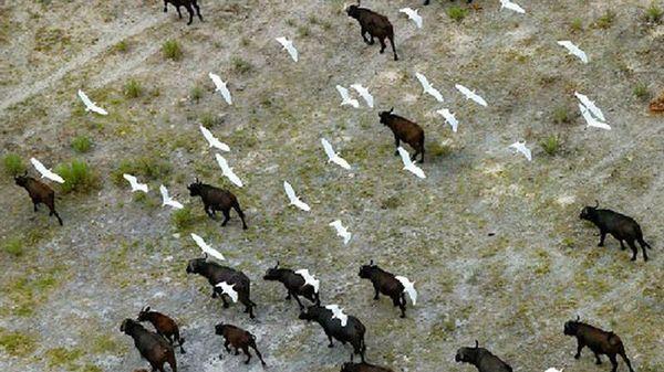 Mê mẩn trước chùm ảnh đẹp về động vật hoang dã ở châu Phi