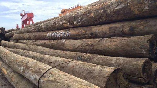 Trung Quốc thu lợi lớn từ gỗ lậu?