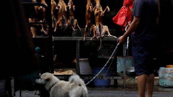 Giải cứu 68 con chó thoát khỏi lễ hội thịt chó ở Trung Quốc
