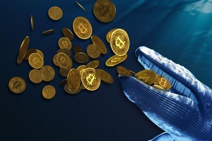 Một tỷ phú vừa mua lượng Bitcoin trị giá 850 triệu USD - Zing - Tri thức trực tuyến