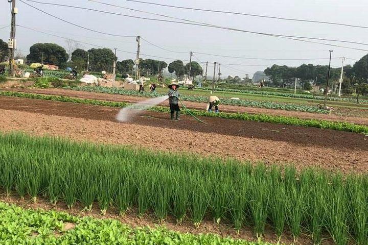 Sản xuất nông nghiệp ổn định giữa đại dịch - Báo Kinh Tế Đô Thị