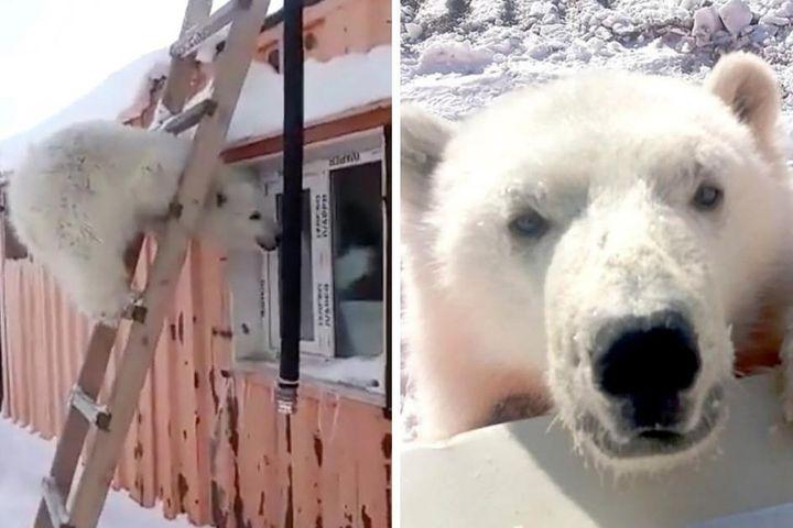 Biết ơn những người cưu mang mình từ nhỏ, gấu Bắc Cực báo đáp bằng món quà vô giá - Chuyên trang Đầu Tư Chứng Khoán