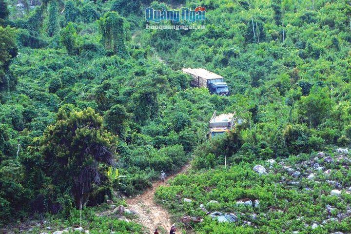 Cần tính toán lại tỷ lệ che phủ rừng - Báo Quảng Ngãi