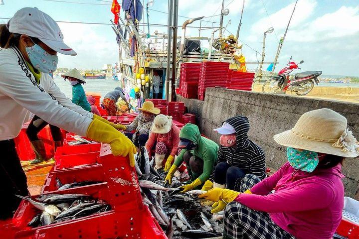 Quảng Ngãi tạm đóng cửa cảng cá - Zing - Tri thức trực tuyến