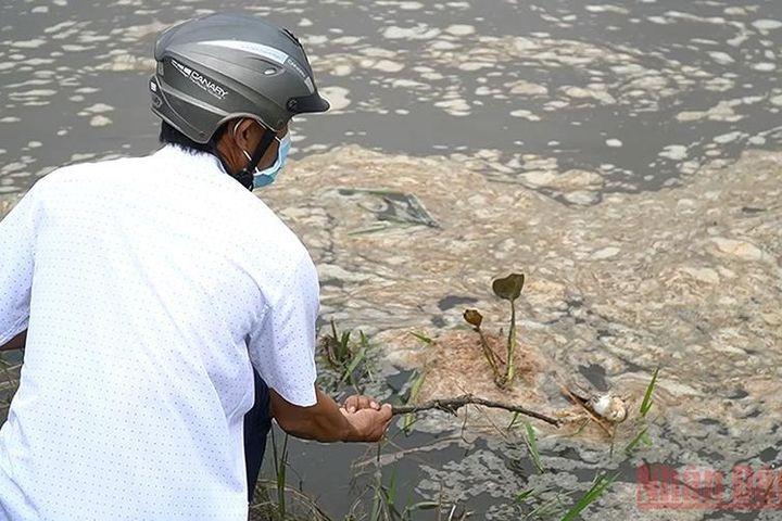 Sớm làm rõ nguyên nhân cá chết bất thường ở TP Quảng Ngãi - Báo Nhân Dân