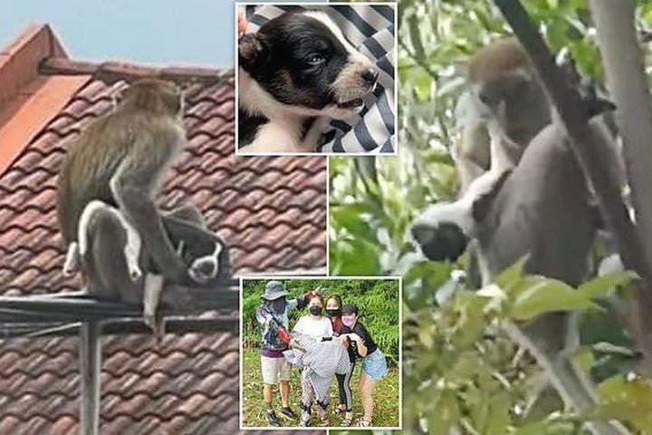 Khỉ hoang bắt cóc chó nhà làm con tin, ba ngày sau mới trả về - Báo Tri Thức & Cuộc Sống