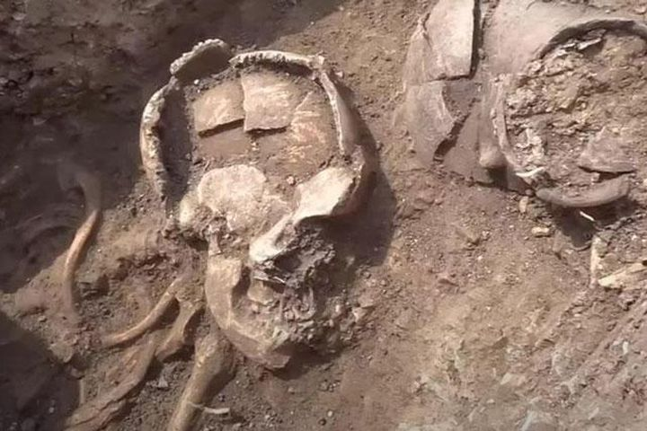 Điều kỳ lạ ở những bộ xương người cổ đại 6.000 tuổi mới được tìm thấy - Doanh Nghiệp Việt Nam