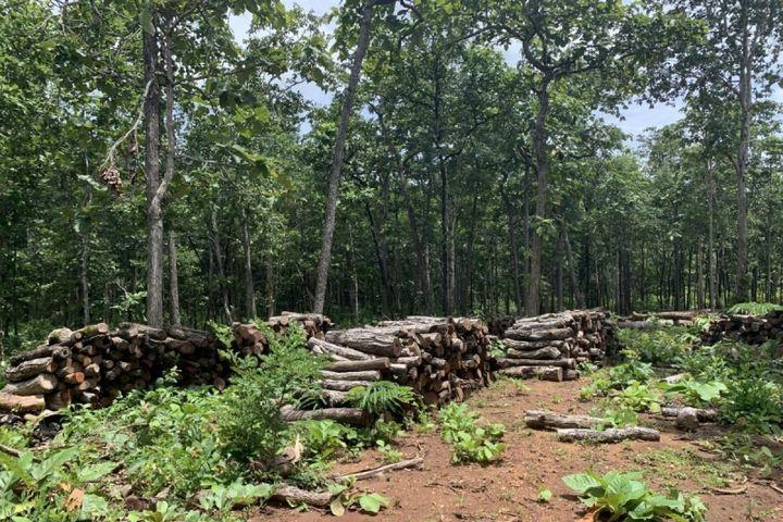 Có một 'công trường' khai thác gỗ trái phép tại Trung tâm bảo tồn voi Đắk Lắk - Báo VOV