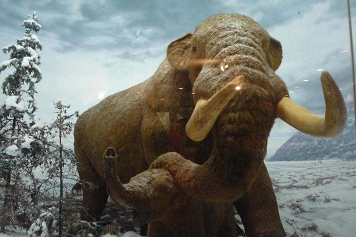 Đi chơi, cậu bé vô tình đạp trúng quái thú 11.000 năm tuổi - Báo Tri Thức & Cuộc Sống