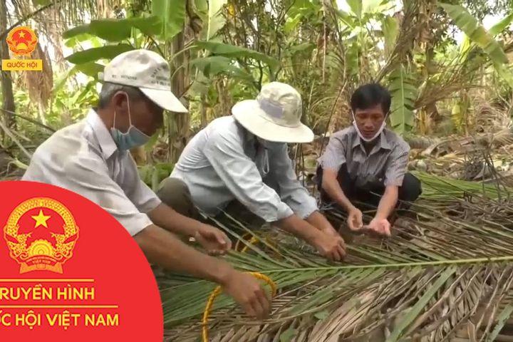 BẾN TRE - NỖ LỰC TIÊU DIỆT SÂU ĐẦU ĐEN HẠI DỪA - Truyền Hình Quốc Hội Việt Nam