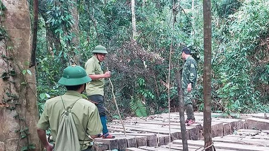Hàng chục cây gỗ lớn nằm trong rừng đặc dụng bị đốn hạ