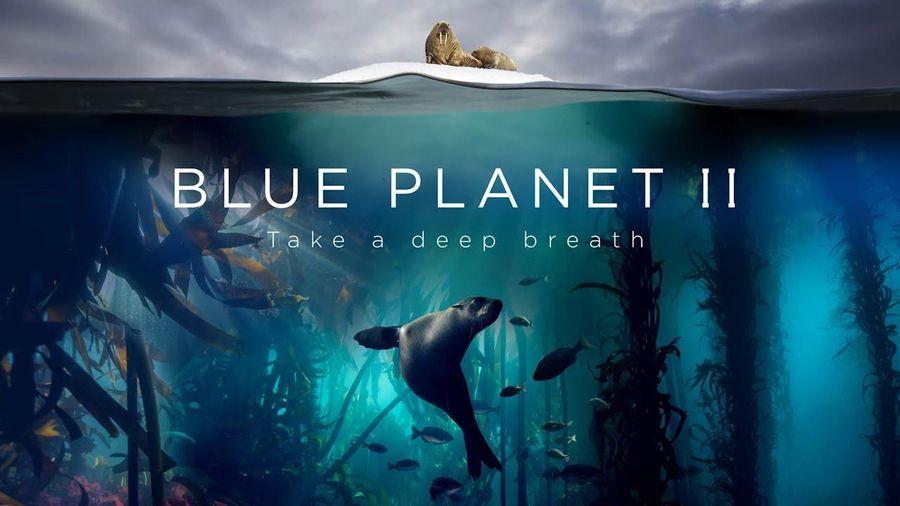 Loạt phim tài liệu 'Blue Planet II' giành giải thưởng Chatham House