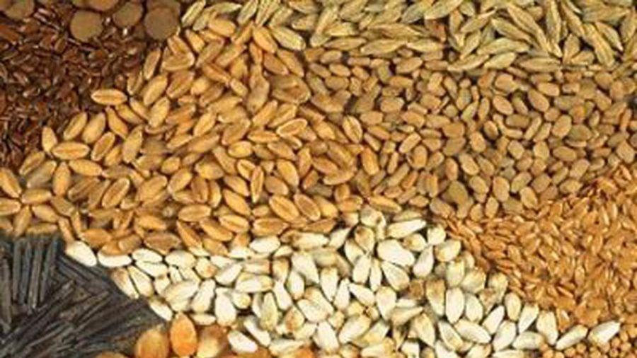 Xuất cấp hạt giống cây trồng cho 4 tỉnh