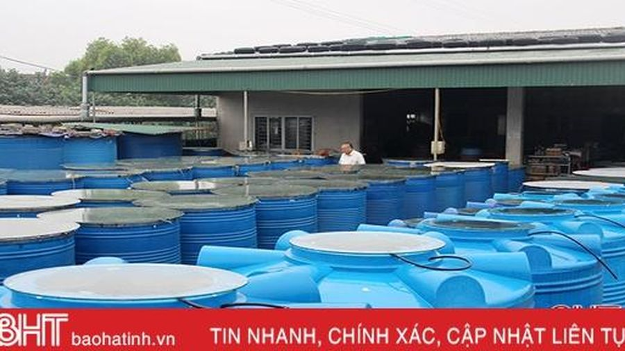 Sáng kiến giúp HTX chế biến nước mắm ở Hà Tĩnh náo đảo bể chượp trong 'chớp mắt'