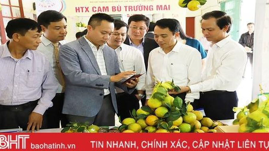 Trao văn bằng bảo hộ nhãn hiệu chứng nhận 'Cam Sơn Mai'