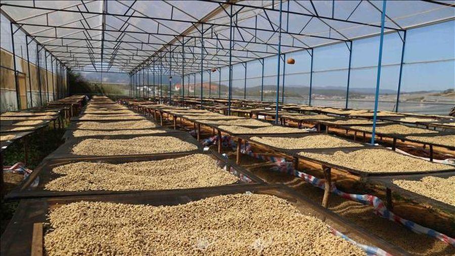 Giá cà phê có xu hướng tăng