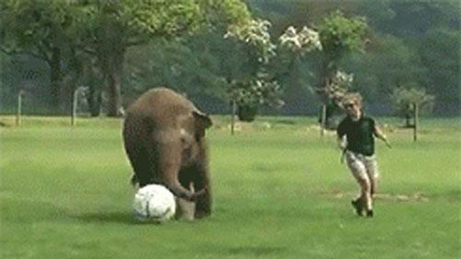 Khi động vật 'khủng' yêu thể thao hơn cả con người