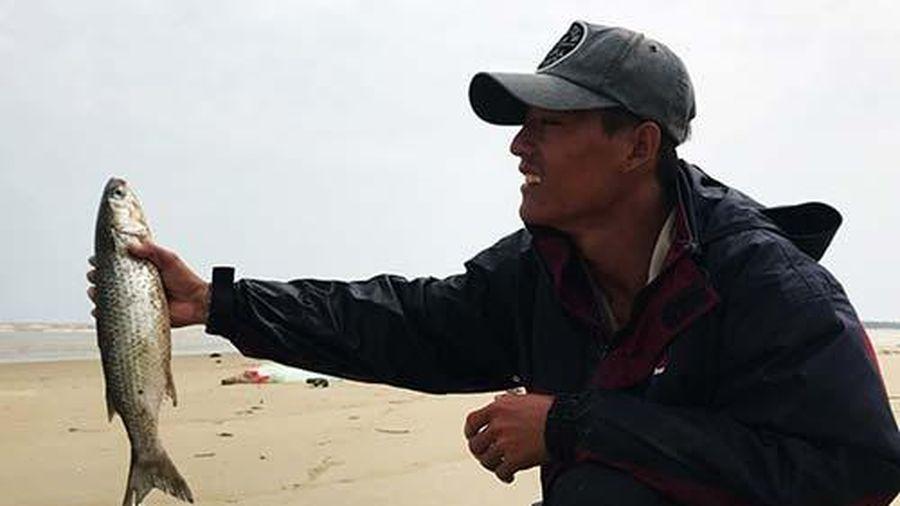 Kỳ thú mùa săn cá đối cồi tươi roi rói, giãy đành đạch ở Quảng Nam