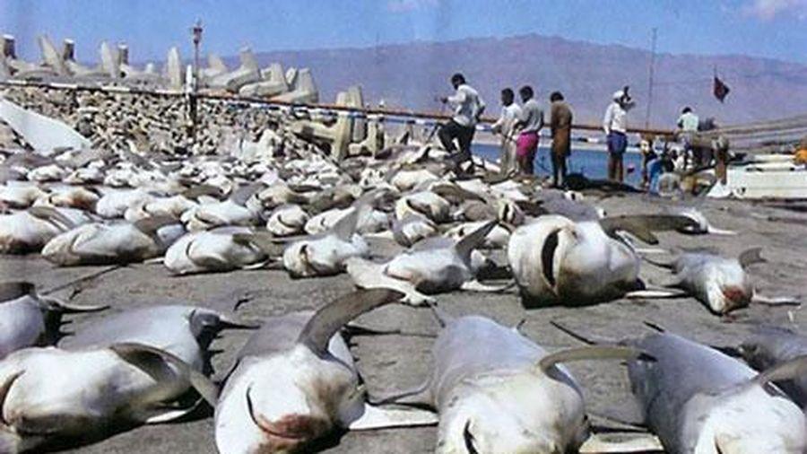 Kịch bản rùng mình khi 'quái vật biển khơi' tuyệt chủng