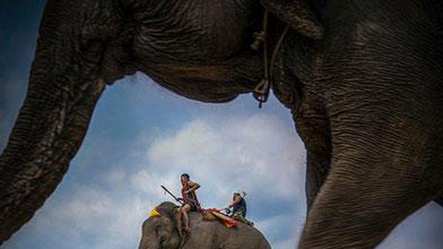 'Bước chân đại ngàn' giành giải đặc biệt tại Vietnam Heritage Photo Awards 2019