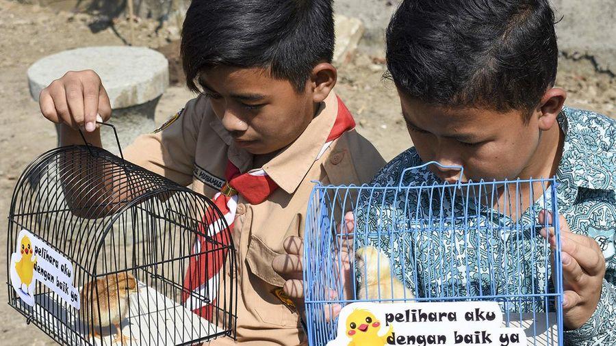 Trẻ em tại Indonesia được tặng gà để hạn chế sử dụng điện thoại