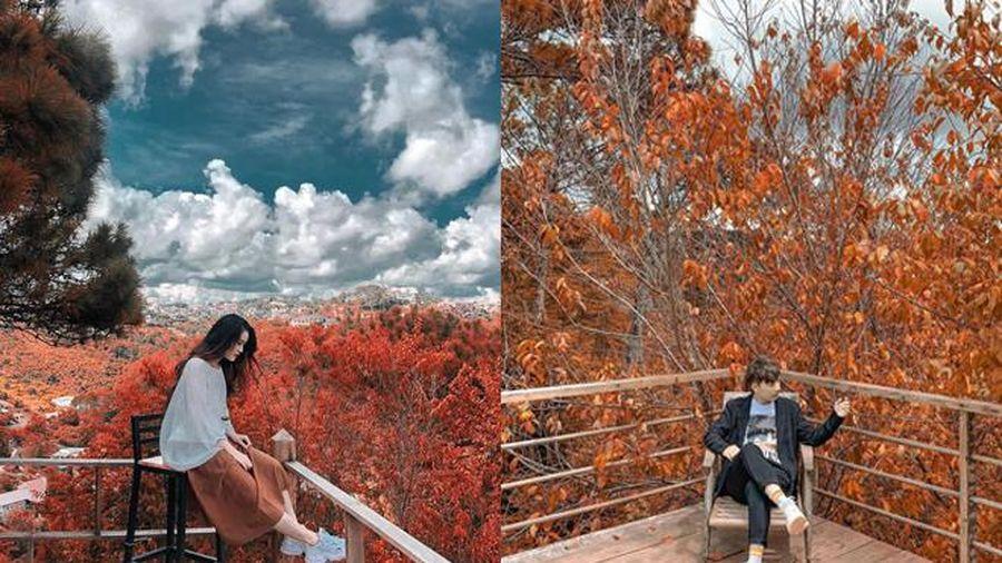 Xuất hiện điểm check-in 'cực chill' ở Đà Lạt với lá đỏ đẹp tựa trời Tây