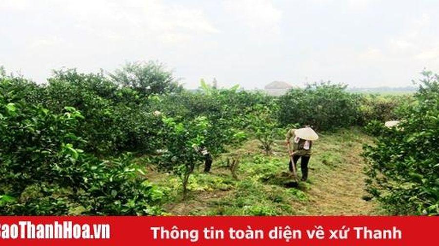 Huyện Thọ Xuân: Xây dựng và nhân rộng nhiều mô hình 'Dân vận khéo' trong phát triển kinh tế