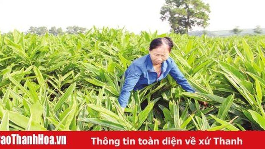 Hiệu quả từ thực hiện các chính sách hỗ trợ phát triển nông nghiệp ở huyện Như Thanh